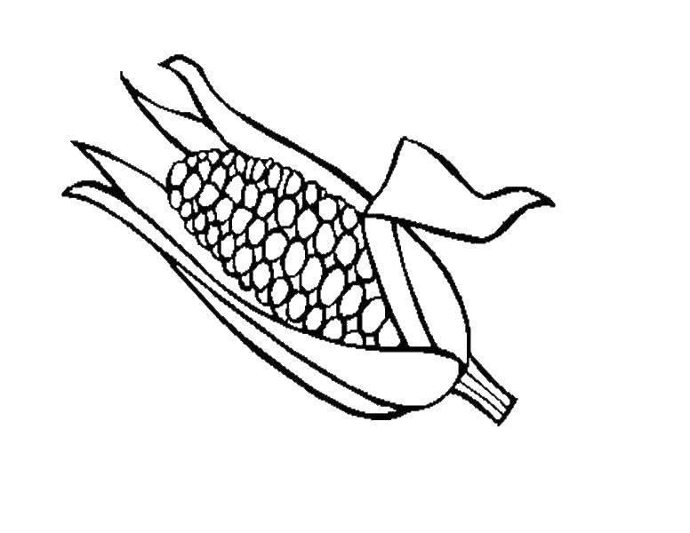 Раскраска Кукуруза Скачать игры, майнкрафт, персонажи.  Распечатать ,майнкрафт,