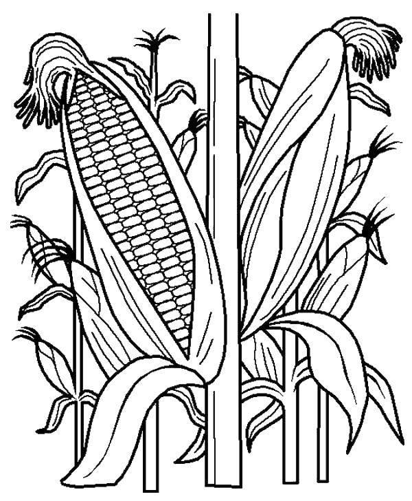 Раскраска Кукуруза Скачать ,Рапунцель,.  Распечатать