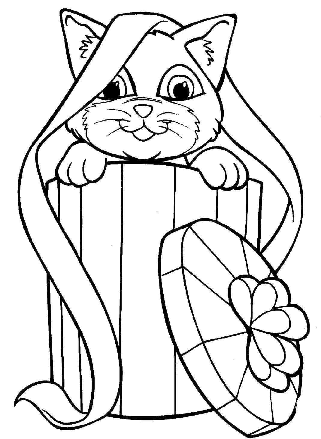 Раскраска Кошка в коробке. Скачать кошки, коробка, бантик.  Распечатать ,Коты и котята,