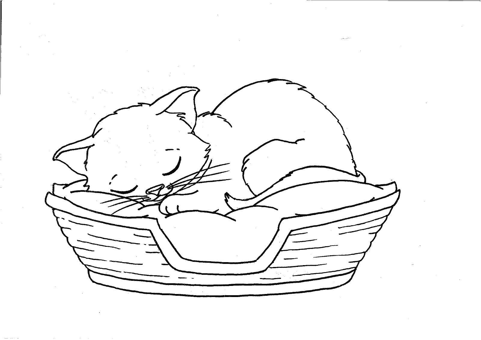 Раскраска Котенок спит в кроватке Скачать котенок, кот.  Распечатать ,Коты и котята,
