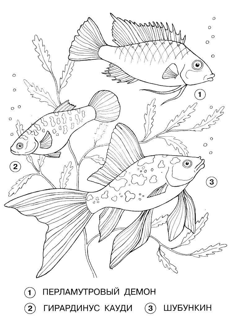 Раскраска рыбы Скачать Балерина, балет.  Распечатать ,балерина,