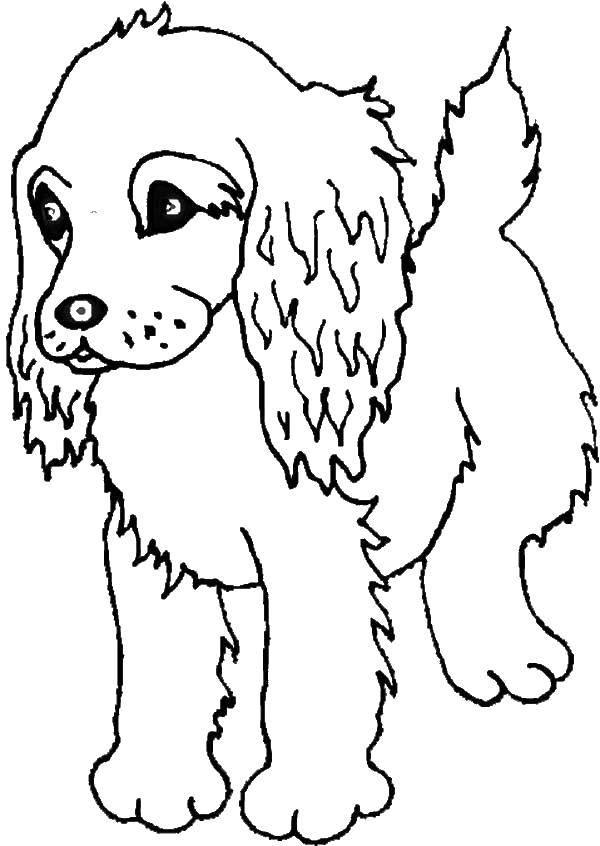 Раскраска Пудель щенок Скачать пудель щенок.  Распечатать ,домашние животные,