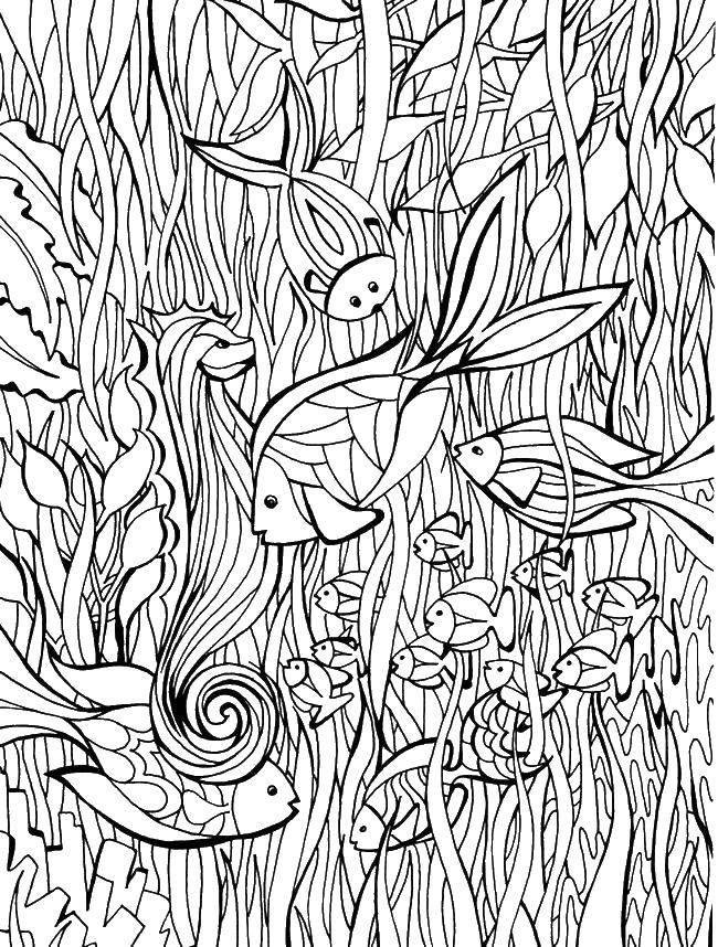 Раскраска рыбы Скачать Зоопарк, животные.  Распечатать ,Животные,