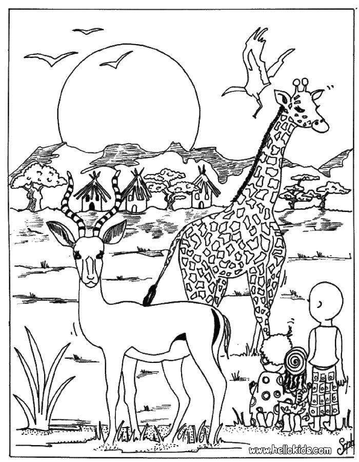 Раскраска Животные Скачать Персонаж из мультфильма, Время Приключений .  Распечатать ,Персонаж из мультфильма,