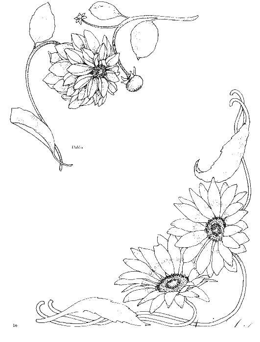 Раскраска Рамка орнамент цвеми Скачать орнамент, цветы.  Распечатать ,узоры орнамент трафареты цветы,