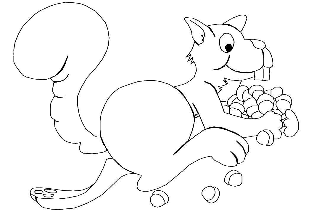 Раскраска белочка Скачать пони.  Распечатать ,Пони,