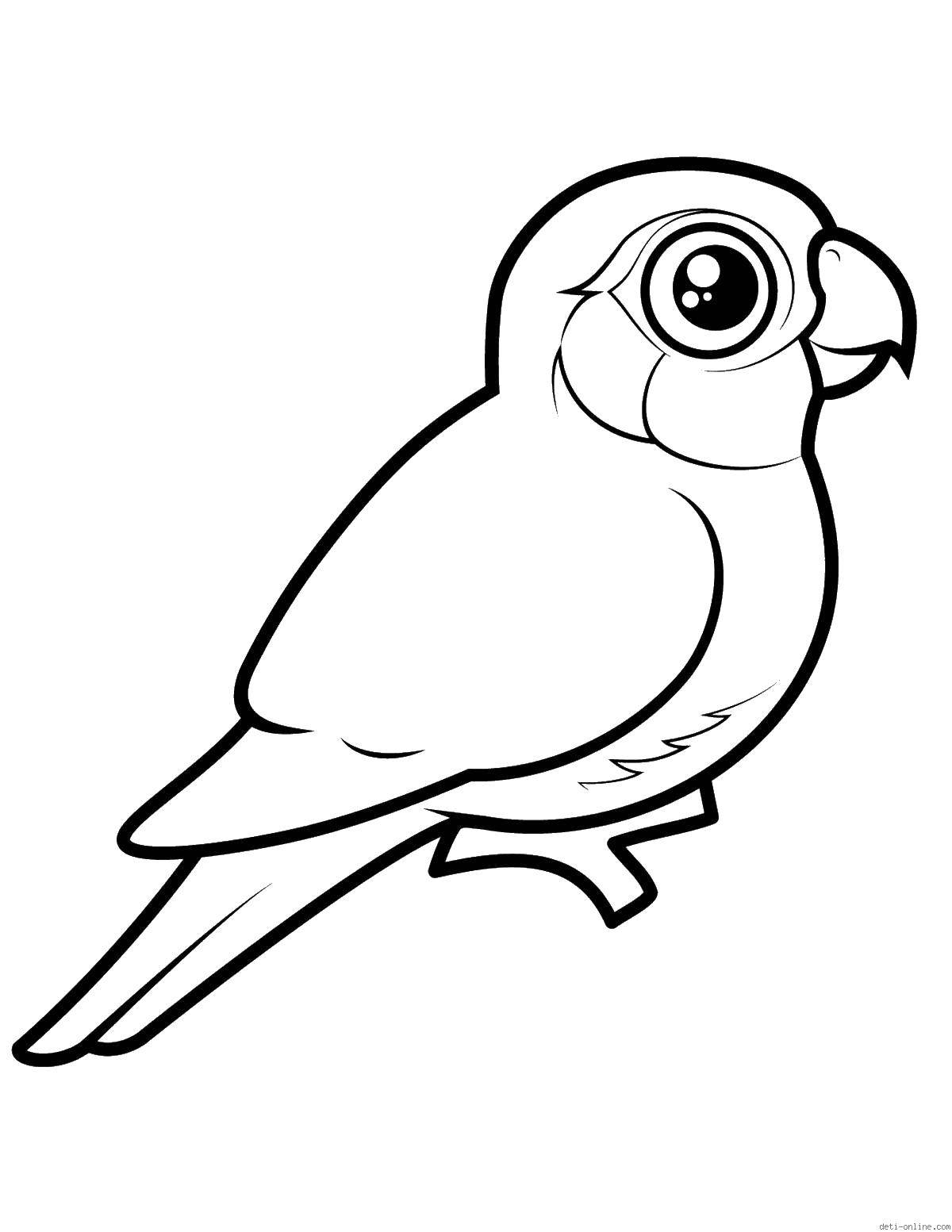 Раскраска птицы Скачать цыпленок, скорлупа, тюльпаны.  Распечатать ,детеныши животных,