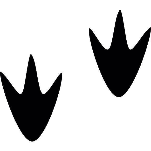 Раскраска Следы утки Скачать следы, утка, лапы.  Распечатать ,Следы животных,