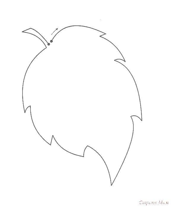 Раскраска Контур осинового листа Скачать контур, лист.  Распечатать ,осиновый лист,