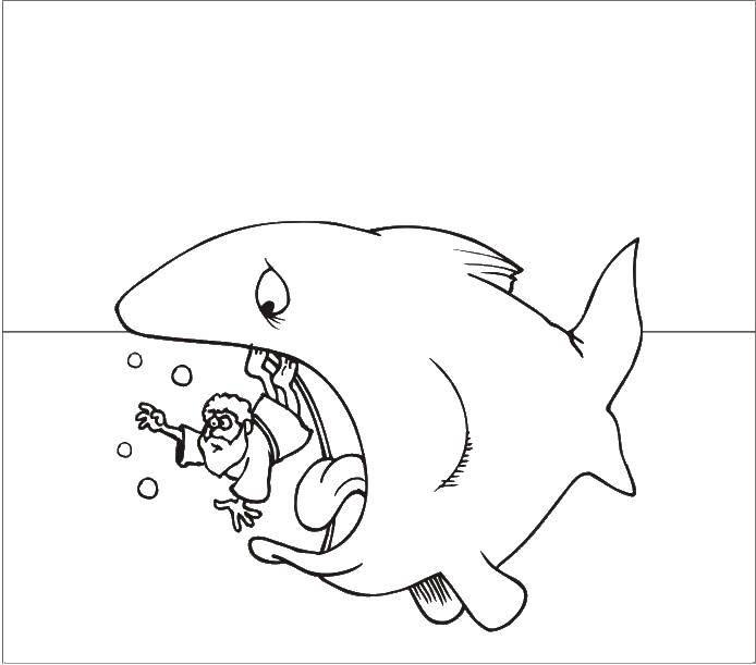 раскраски человек раскраска акула и человек рыбы