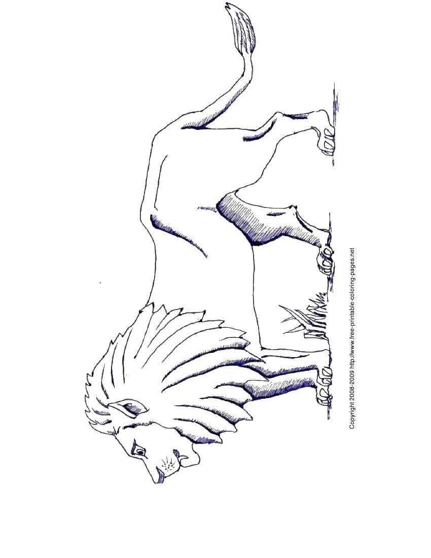 Раскраска Животные Скачать Подводный мир, рыба.  Распечатать ,раскраски,