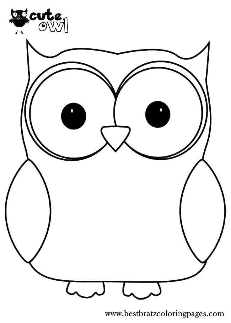 Раскраска Совушка большими глазами Скачать сова, птица, глаза.  Распечатать ,птицы,