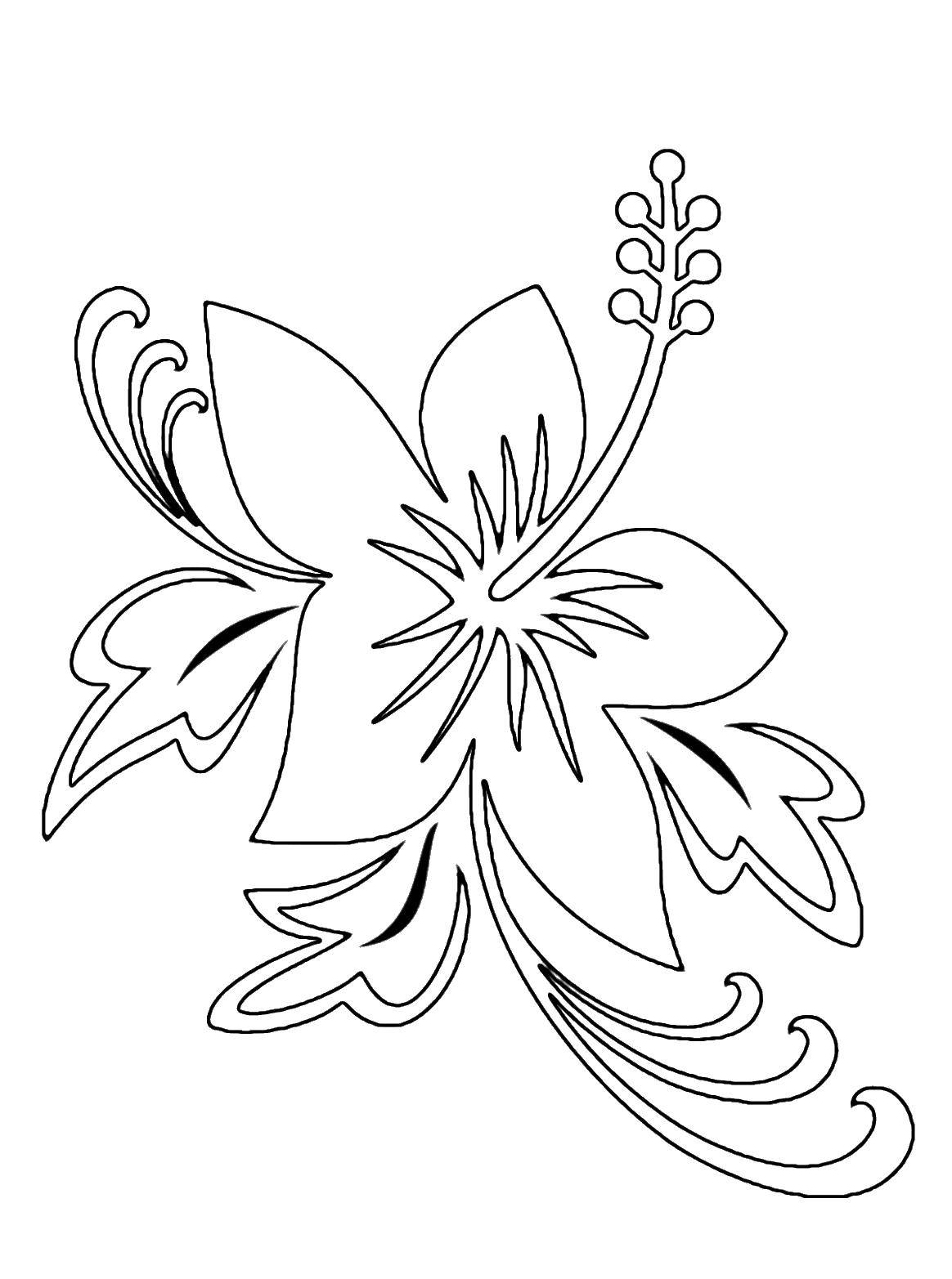 Раскраски цветка, Страница:3.