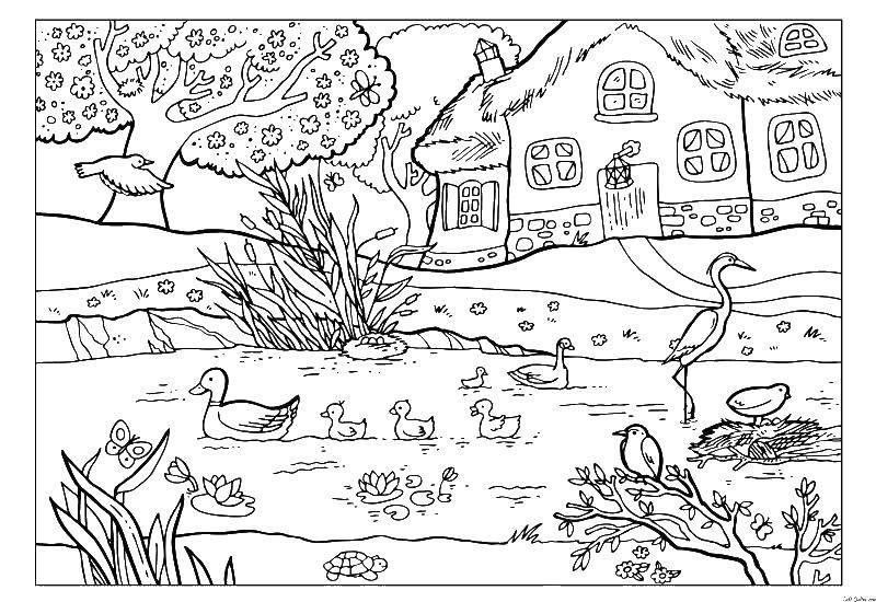 Раскраска Домик в деревне Скачать ,деревня, природа, птички,.  Распечатать