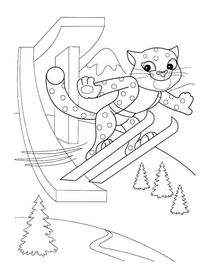 Раскраска Снежный барс на лыжах Скачать барс, лыжи, трамплин.  Распечатать ,олимпийские игры,