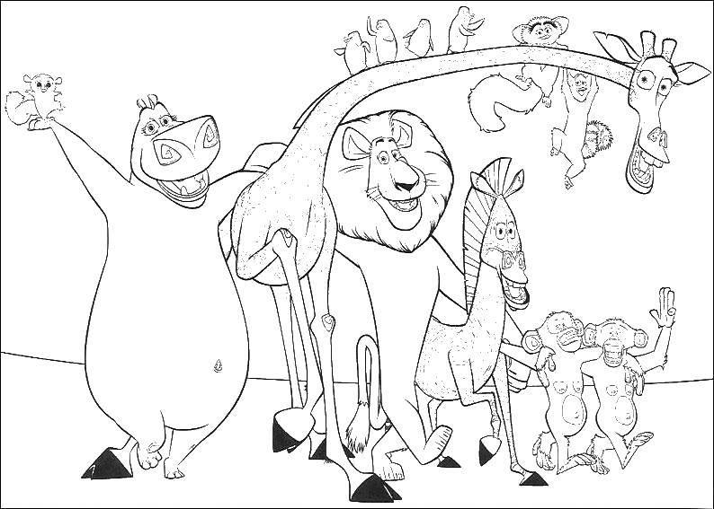 Раскраска Мадагаскар Скачать ,зебра, жираф, лев, бегемот,.  Распечатать