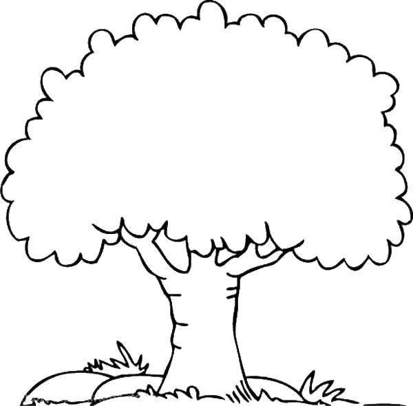 Раскраска Семейное дерево Скачать ,деревья, дерево, листва,.  Распечатать