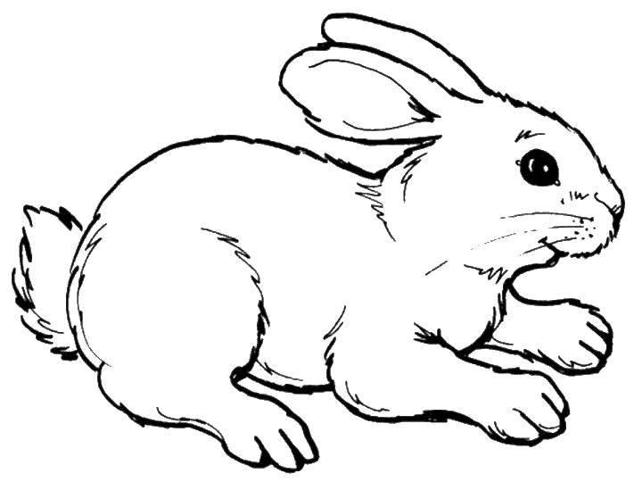 Раскраска Кролик бежит Скачать кролик, заяц.  Распечатать ,кролик,