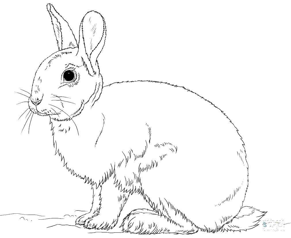 Раскраска кролик Скачать супергерои, марвел.  Распечатать ,супергерои,