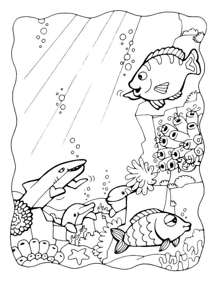 Раскраска Рыбы, акула, дельфины, кораллы, водоросли Скачать Подводный мир, рыба, акула, дельфин.  Распечатать ,рыбы,