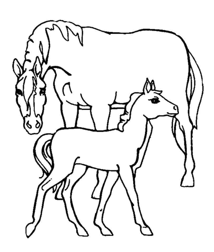 Раскраска Мама лошадка с ребеночком Скачать Животные, лошадь.  Распечатать ,Животные,