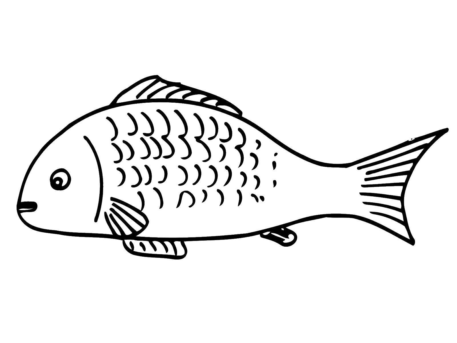 Coloring sheet fish Download ,Princess Cadance, Shining Armor,.  Print