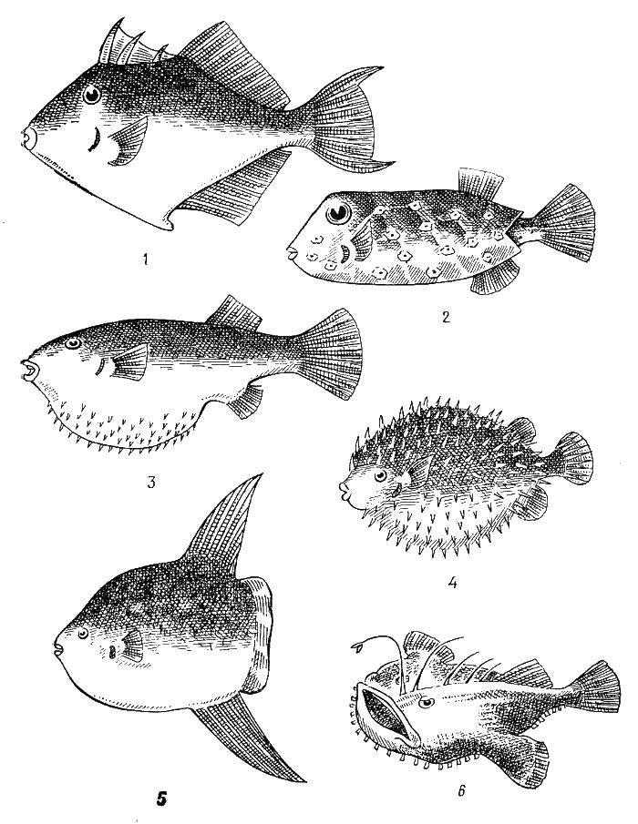 Виды рыб картинки для детей распечатать