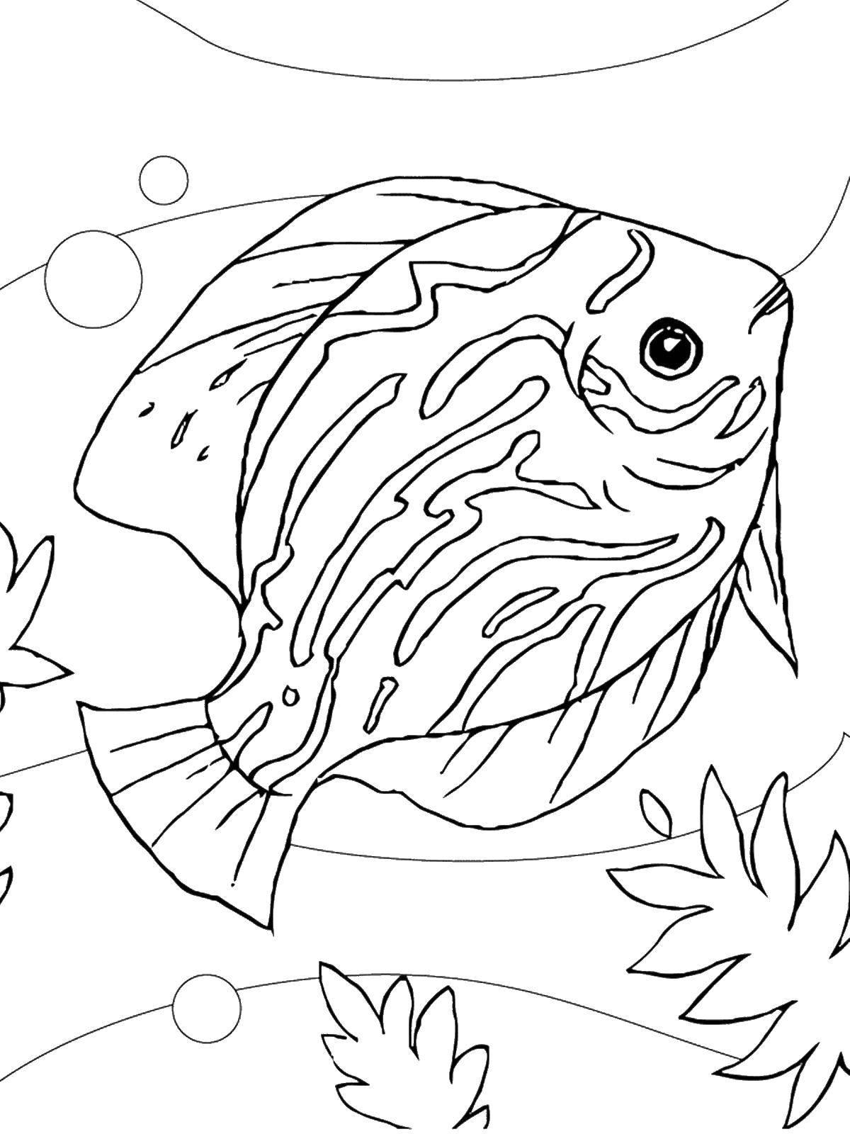 Раскраски Раскраска Рыбки в аквариуме рыбы, скачать ...