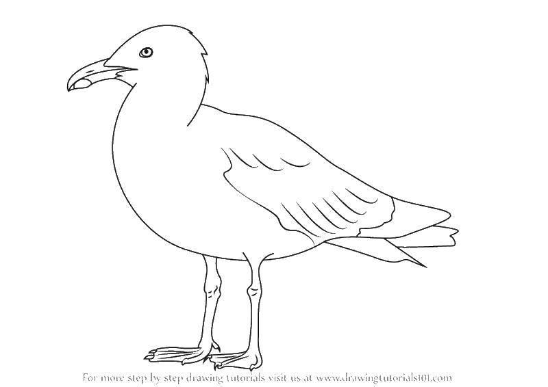 Coloring sheet birds outline Download .  Print