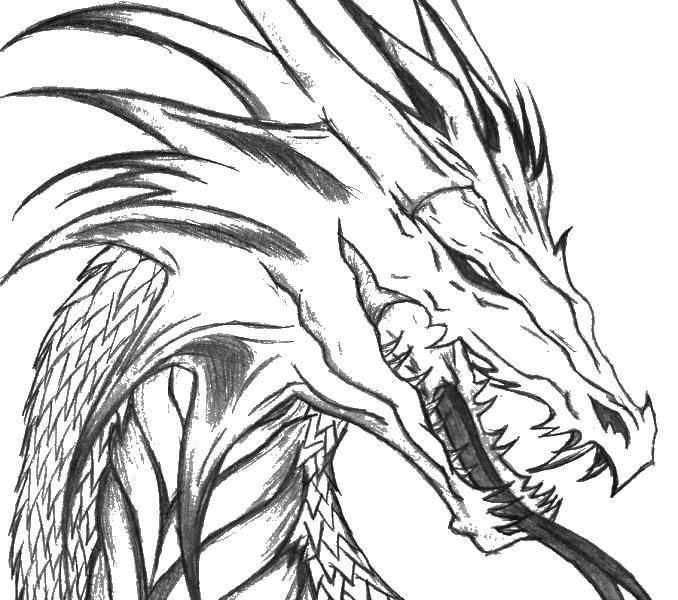 Coloring Draconia head Download Dragons, dragon,.  Print