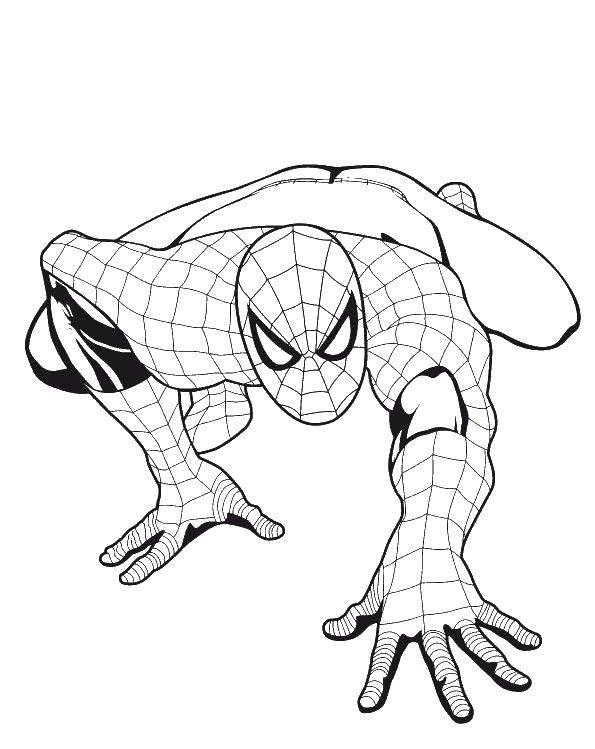 Распечатать картинки с человеком пауком