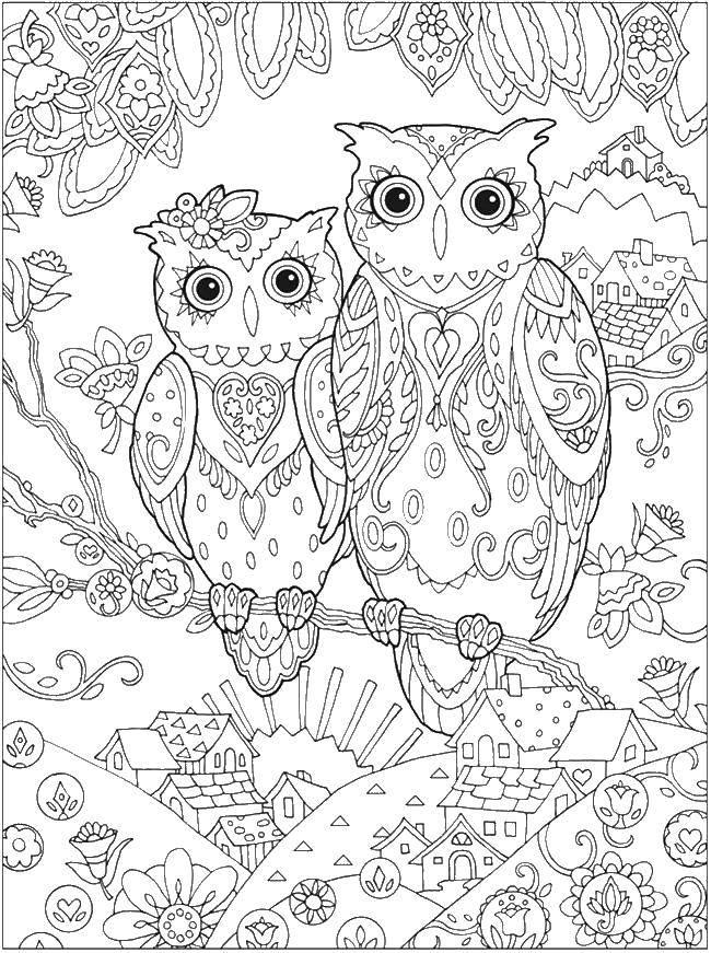 Раскраска ночные птицы Скачать ,совы, птицы,.  Распечатать