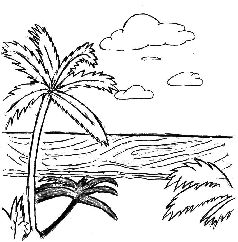 Картинки простым карандашом про лето