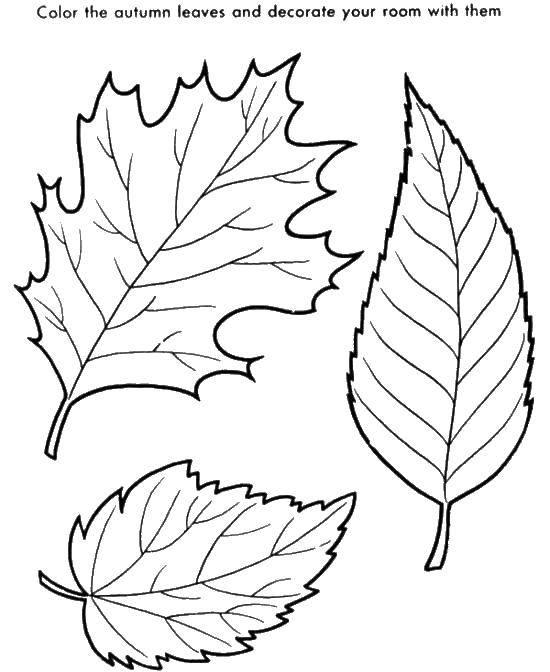 Раскраска Контуры листьев Скачать ,контуры, листва,.  Распечатать