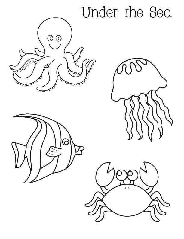 Раскраска морские обитатели Скачать ,осьминог, медуза, рыбка, кра,.  Распечатать