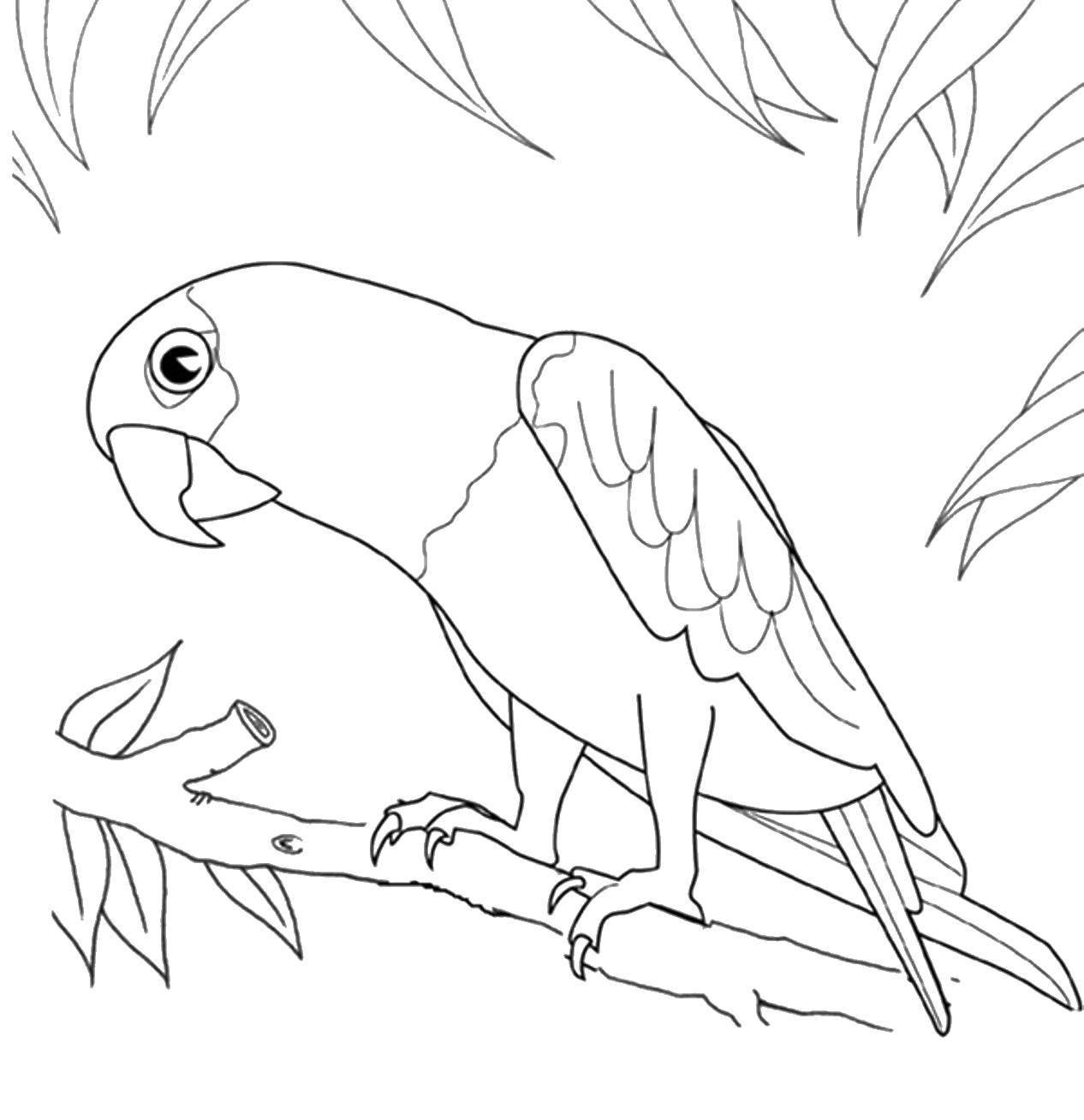Картинки раскраски про попугаев