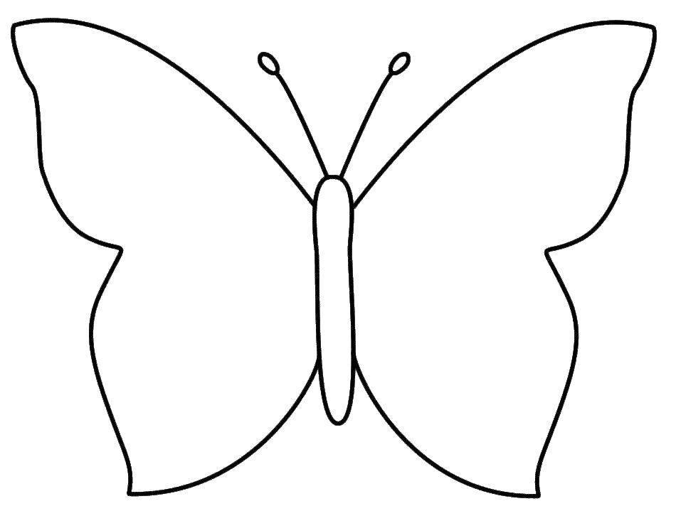 Раскраска бабочки Скачать ,насекомые, бабочка, крылья,.  Распечатать