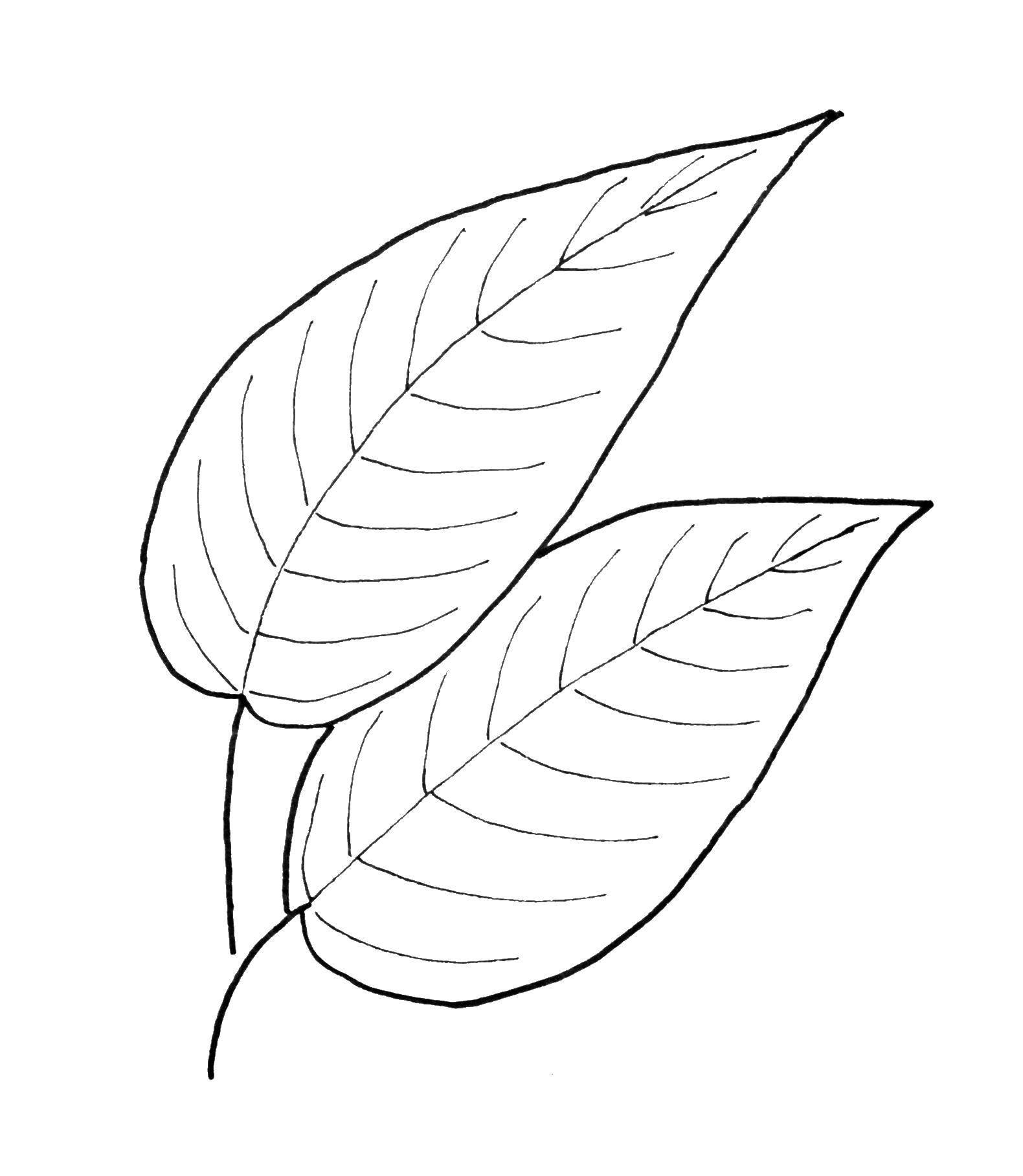 Картинка листочка раскраска