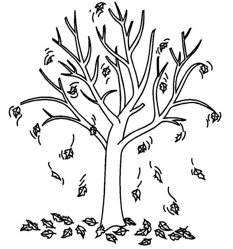 профессиональным картинка дерева с опавшими листьями нашем сайте сможете