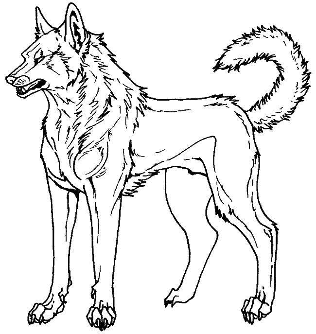 картинки для раскраски волка пижамный тренд