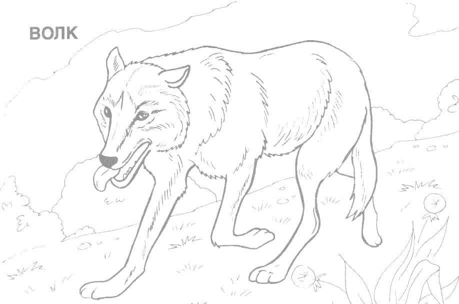 Coloring sheet wild animals Download English.  Print ,English,