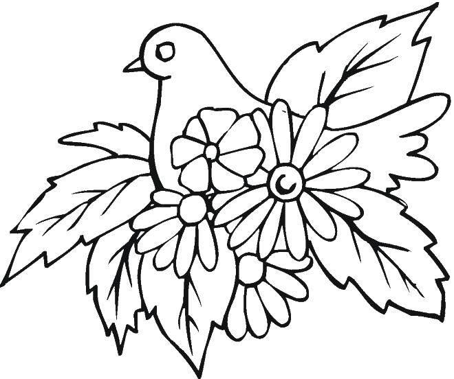рисунки для раскрашивания голуби шляпы чаще