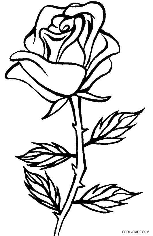 Раскраска картинка роза