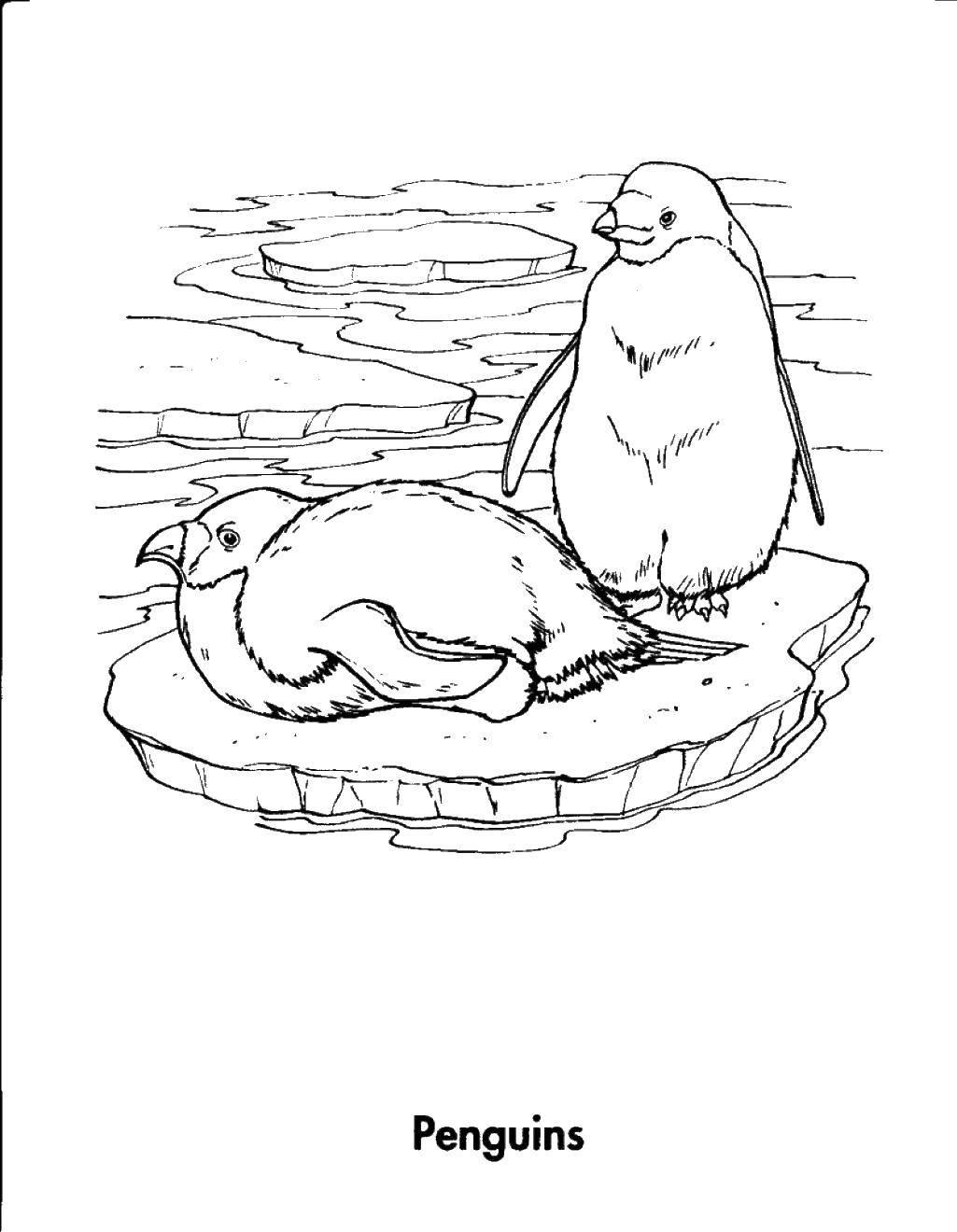Раскраска картинок птиц александры настоящее