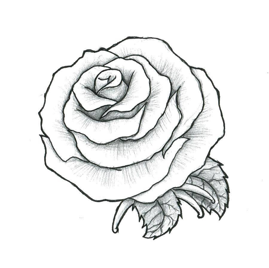 Раскраска Рисунок розы Скачать ,Цветы,розы,.  Распечатать