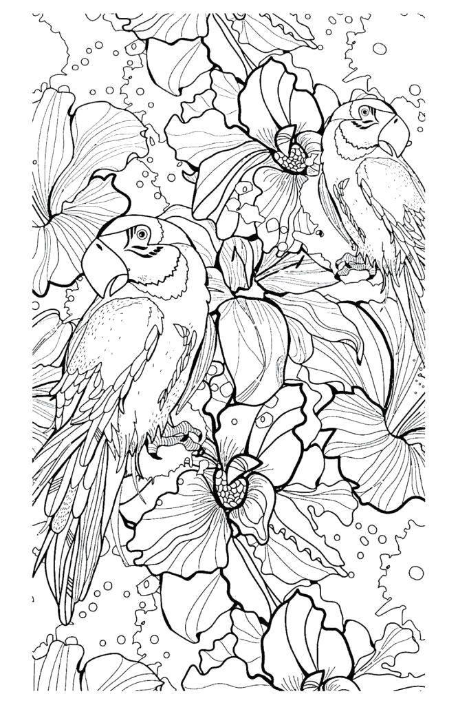 Раскраски попугаи, Раскраска Попугаи уселись в цветах птицы.
