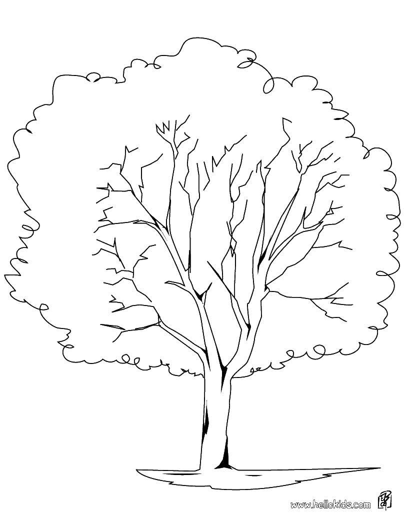 Раскраски Раскраска Пальма дерево, Раскраски
