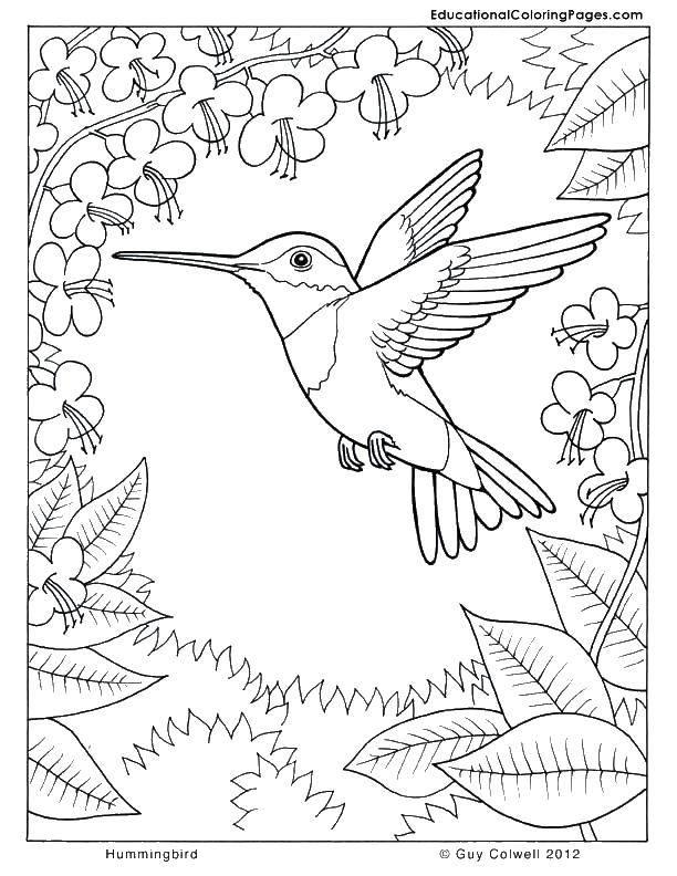 Coloring sheet Nature Download recipe.  Print ,Tracing,