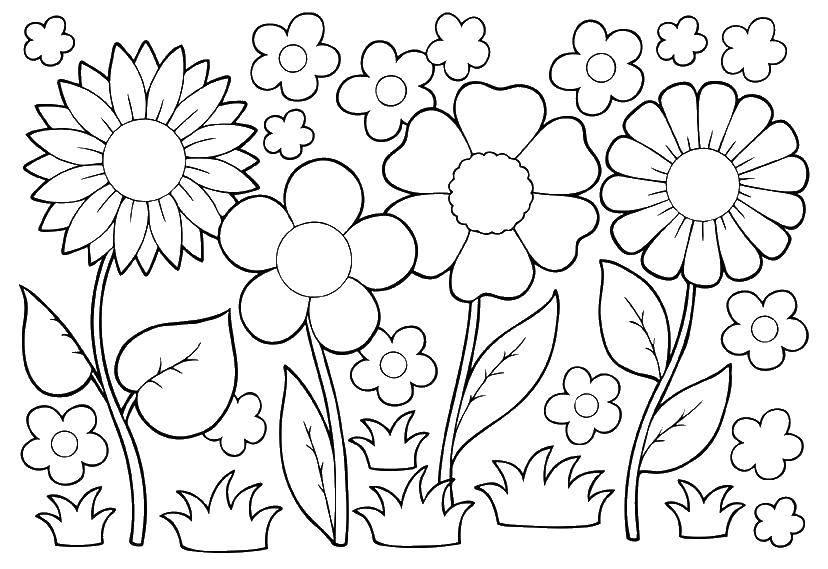 Раскраска Милые цветочки Скачать ,цветы, растения,.  Распечатать
