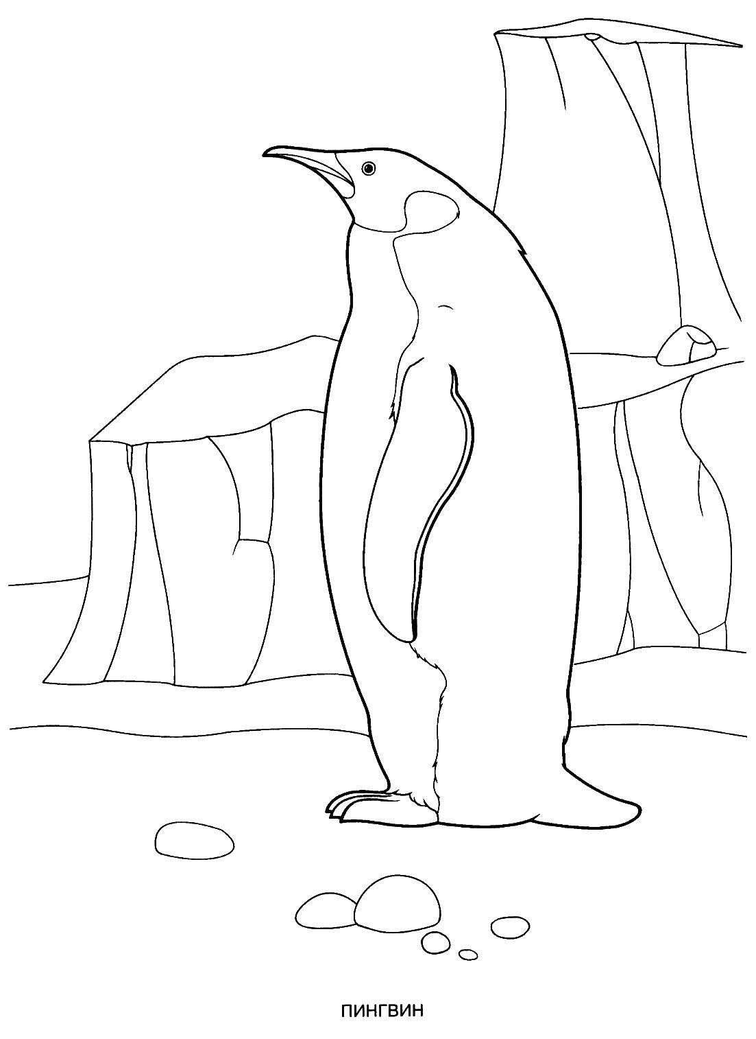 Coloring sheet penguin Download ,cartoons, children,.  Print